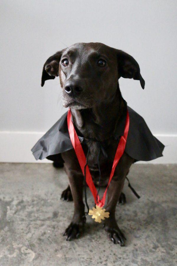 5 DIY Halloween Pet Costumes | Greta Hollar - 5 DIY Halloween Pet Costumes by popular & 5 DIY Halloween Pet Costumes | Halloween | Greta Hollar