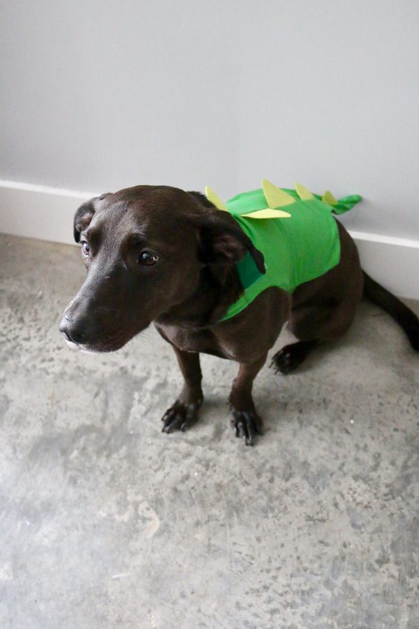 5 DIY Halloween Pet Costumes | Greta Hollar - 5 DIY Halloween Pet Costumes by popular Nashville blogger Greta Hollar