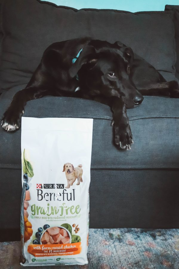Purina® Beneful® featured by top US lifestyle blogger Greta Hollar