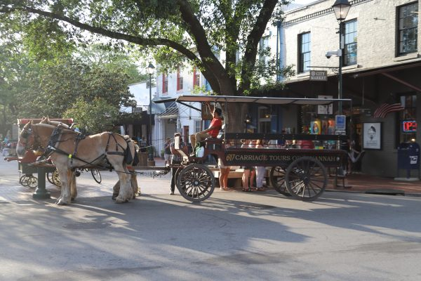 Savannah Travel Guide | Greta Hollar | he Ultimate Savannah Travel Guide by popular Nashville lifestyle blogger, Greta Hollar: image of horse and carriage.