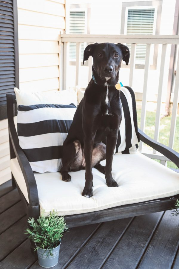 The Piece You Need for Your Front Porch | Greta Hollar | Adult Dog Survival Guide with Purina Beneful by popular Nashville lifestyle blogger, Greta Hollar: image of a black labradane dogs sitting outside on a chair.