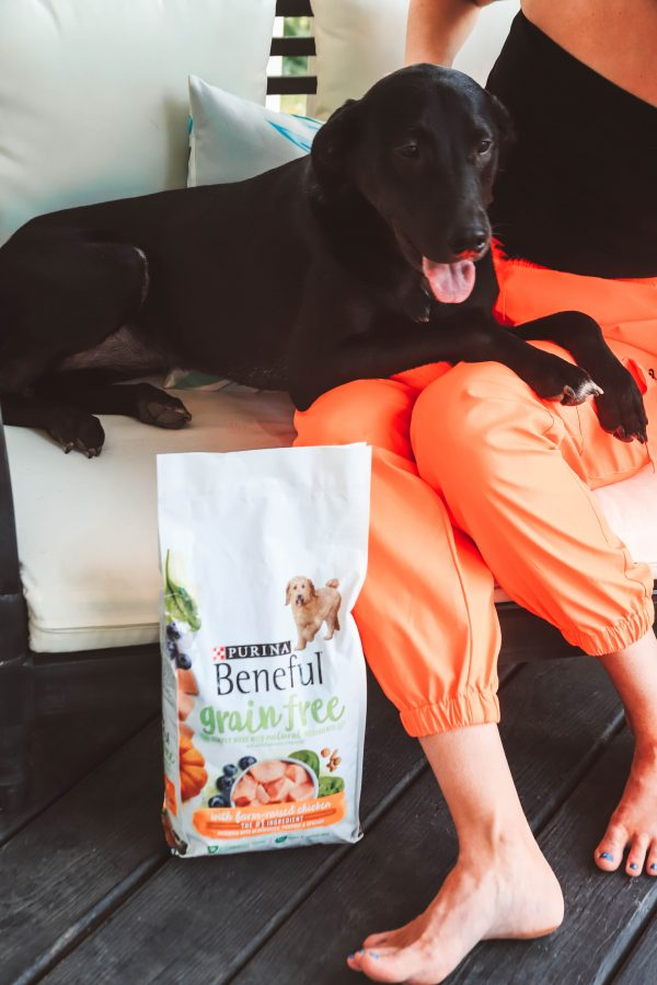 Adult Dog Survival Guide | Greta Hollar | Adult Dog Survival Guide with Purina Beneful by popular Nashville lifestyle blogger, Greta Hollar: image of a woman sitting outside on her porch with her black labradane dog and a bag of Purina Beneful.