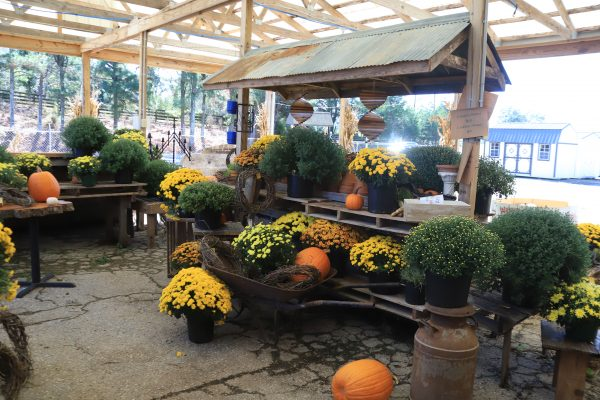 A Couples Getaway to Hohenwald, TN | Greta Hollar | A Couples Getaway: Things to do in Hohenwald TN by popular Nashville travel blogger, Greta Hollar: image of All Around Southern Mercantile.