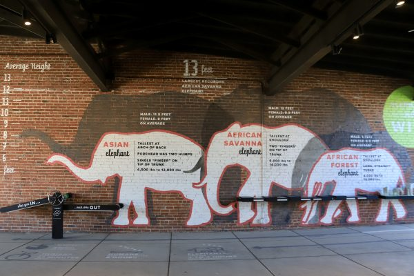A Couples Getaway to Hohenwald, TN | Greta Hollar| A Couples Getaway: Things to do in Hohenwald TN by popular Nashville travel blogger, Greta Hollar: image of the Elephant Discovery Center.
