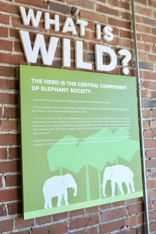 A Couples Getaway to Hohenwald, TN | Greta Hollar | A Couples Getaway: Things to do in Hohenwald TN by popular Nashville travel blogger, Greta Hollar: image of the Elephant Discovery Center.