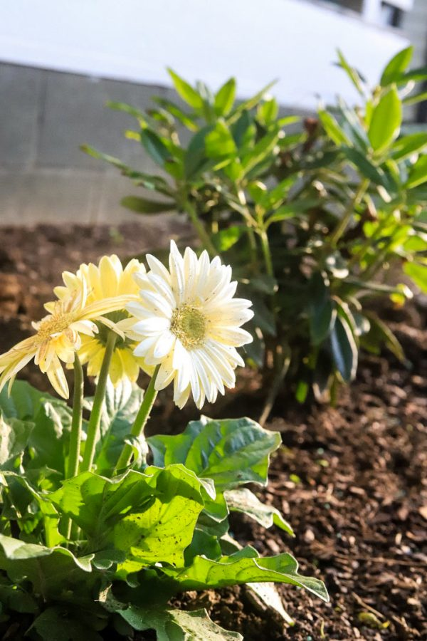 How to Get Your Garden Ready for Spring | Greta Hollar