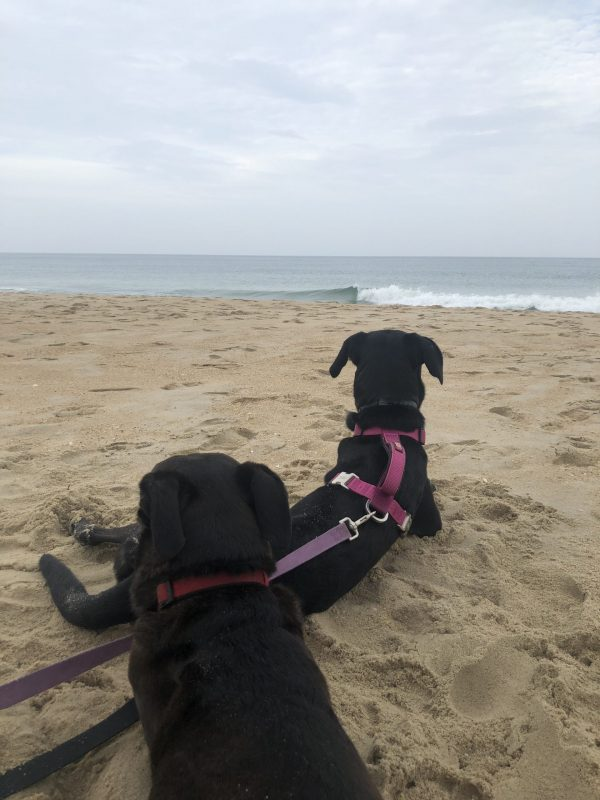 Outer Banks NC by popular Nashville travel blogger, Greta Hollar: image of two black dogs sitting in the sand at Old Lighthouse Beach.